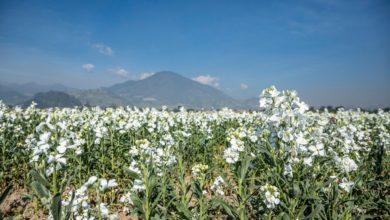Floricultores esperan gran derrama económica