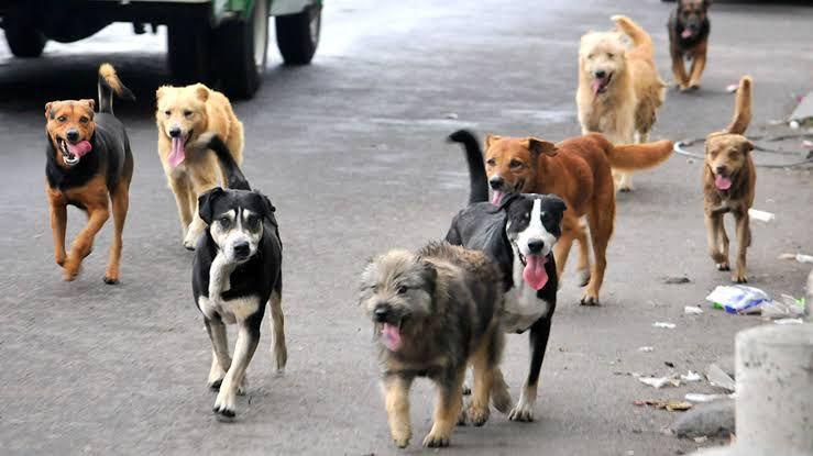 adopciones caninas