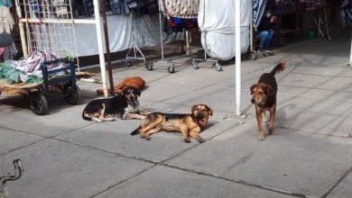 Los perros en situación de calle