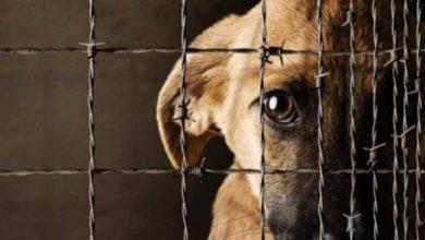 El maltrato animal debe ser castigado