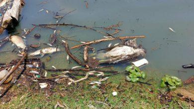 En la presa han muerto cientos de peces